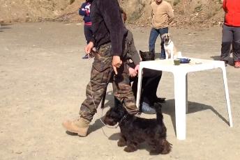 collar de puntas para adiestramiento canino