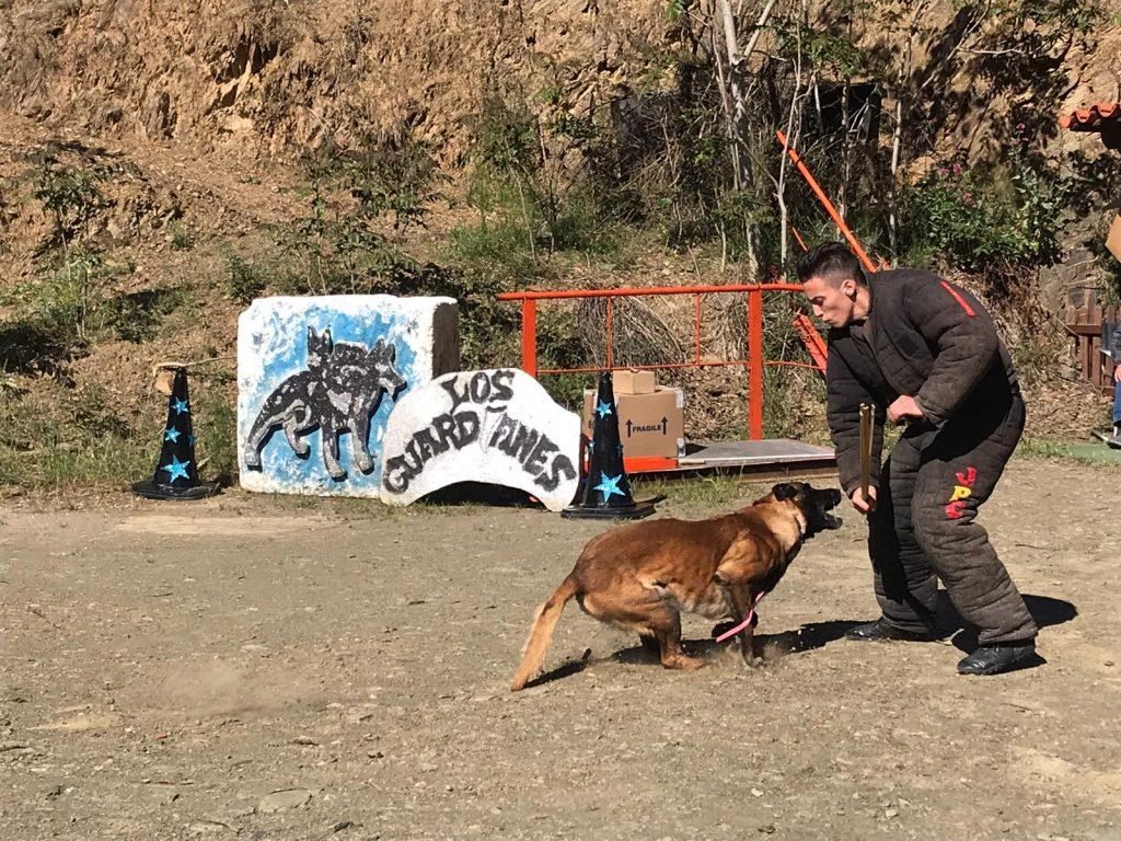 adiestrador canino mondio