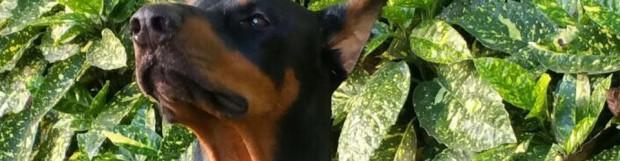 Agresividad en perros por malas praxis, caso real