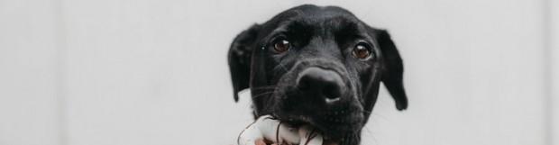 5 tips para adiestrar a tu perro a no robar comida