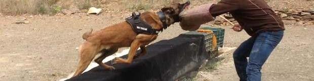 El arte del adiestramiento canino: juego, pasión y coraje