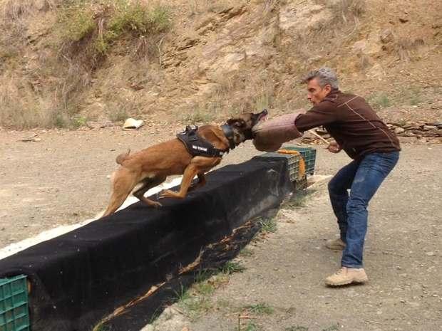 Arte de adiestramiento canino