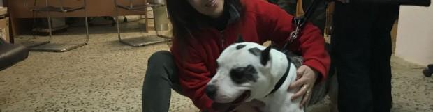 Perros de raza potencialmente peligrosa: Caso Brutus