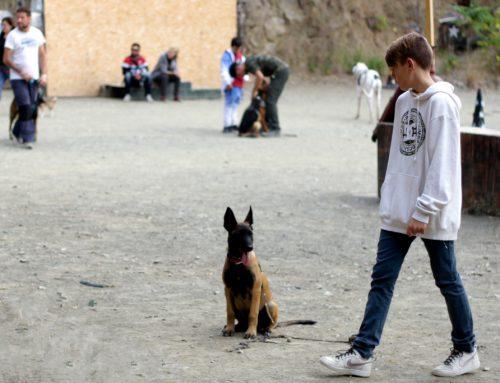 Cómo elegir un buen curso de adiestrador canino