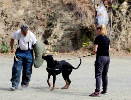 Deportes Caninos: 6 opciones que puedes practicar con tu perro