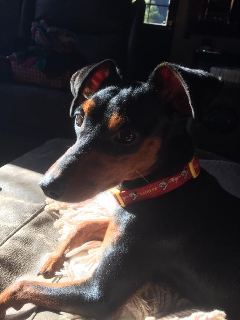educación perros en casa