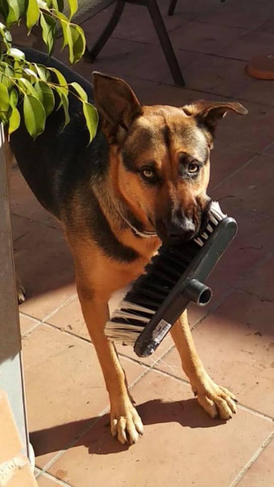 llamada a perro educación canina