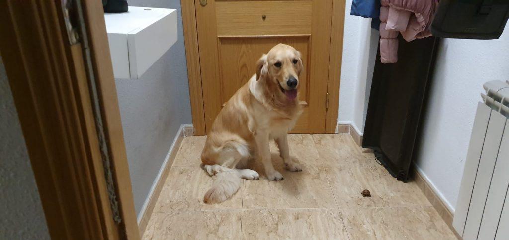 perro tranquilo en la puerta de casa