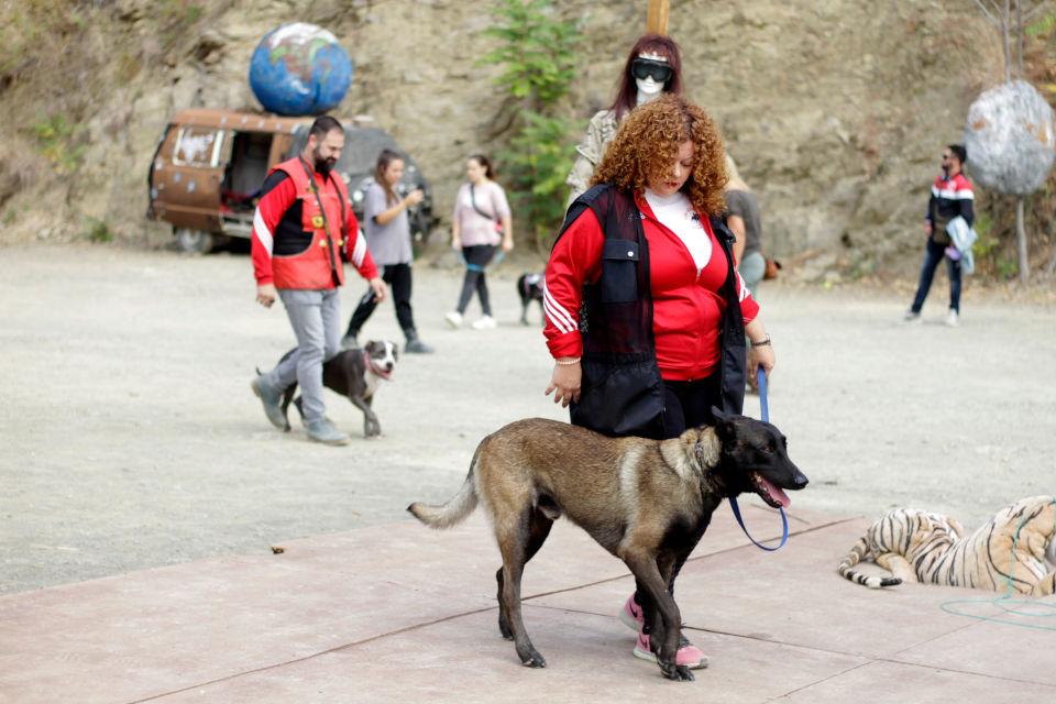 entrenamiento canino club