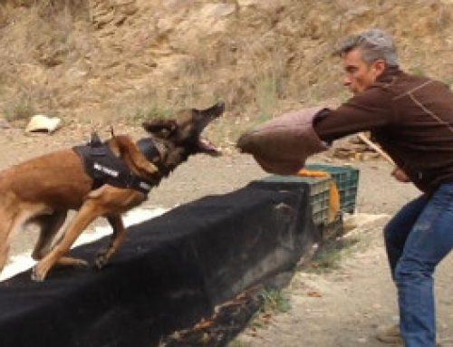 Perros agresivos: 5 consejos de adiestramiento canino