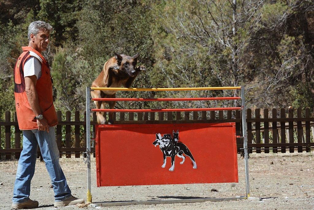 perro saltando en mondioring