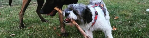 5 consejos para que tu perro acepte al nuevo cachorro
