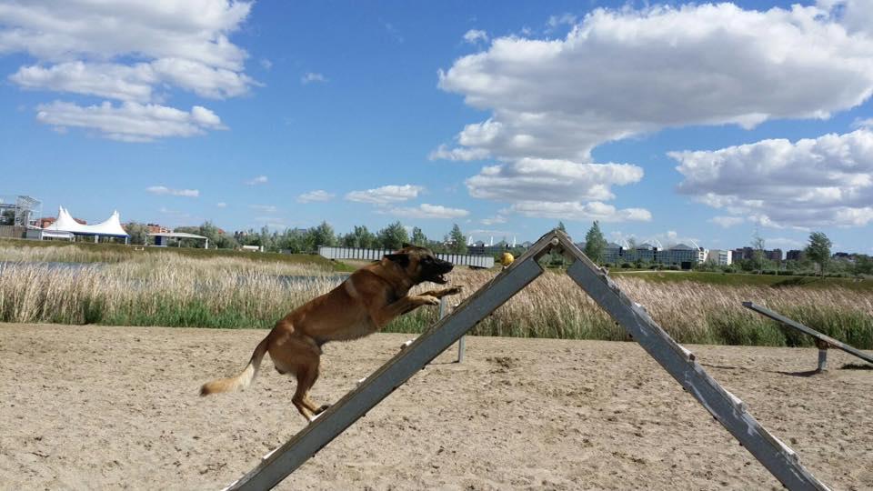 perro equilibrado ejercicio