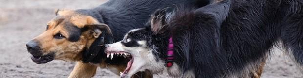 Mi perro ladra a otros perros cuando va atado, ¿cómo lo soluciono?