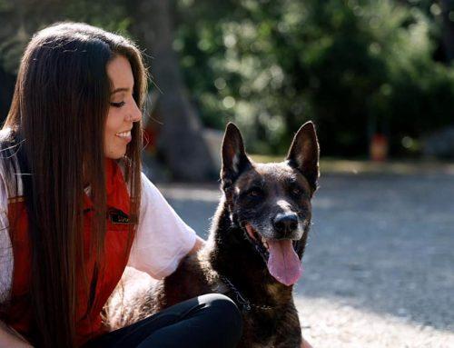 Mi perro ladra cuando oye a los vecinos: Aprende a solucionarlo ya
