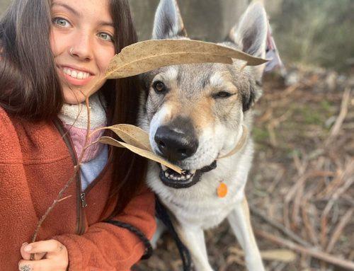 10 situaciones que estresan a los perros y que no eres consciente