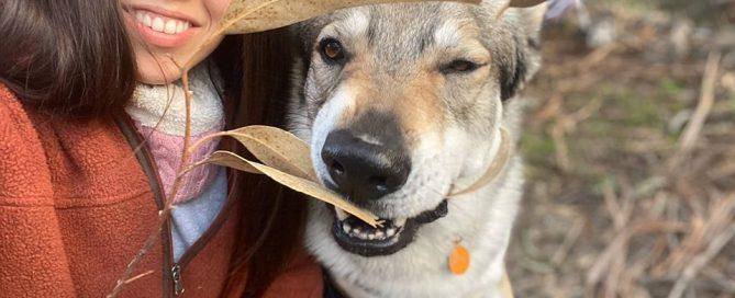 perro feliz en la calle
