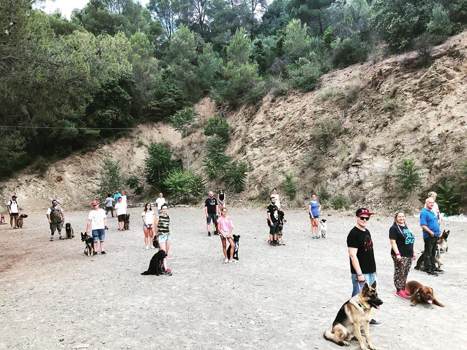 perros clase socializacion