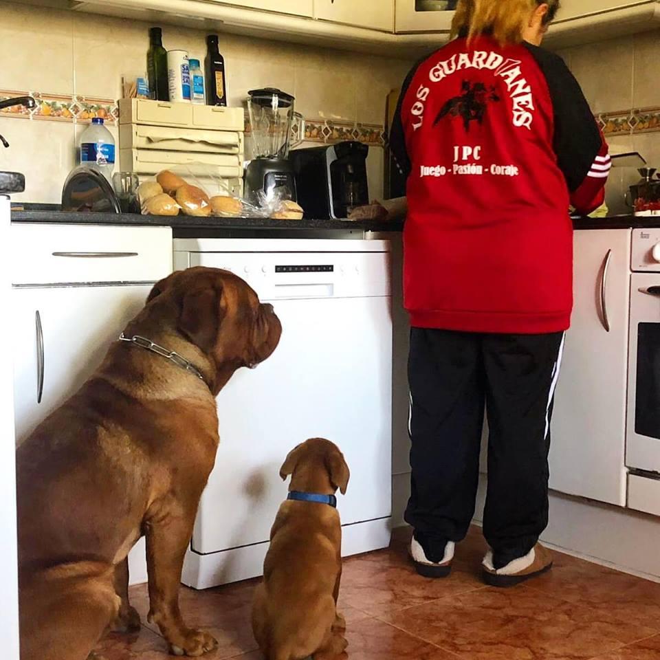perros educados