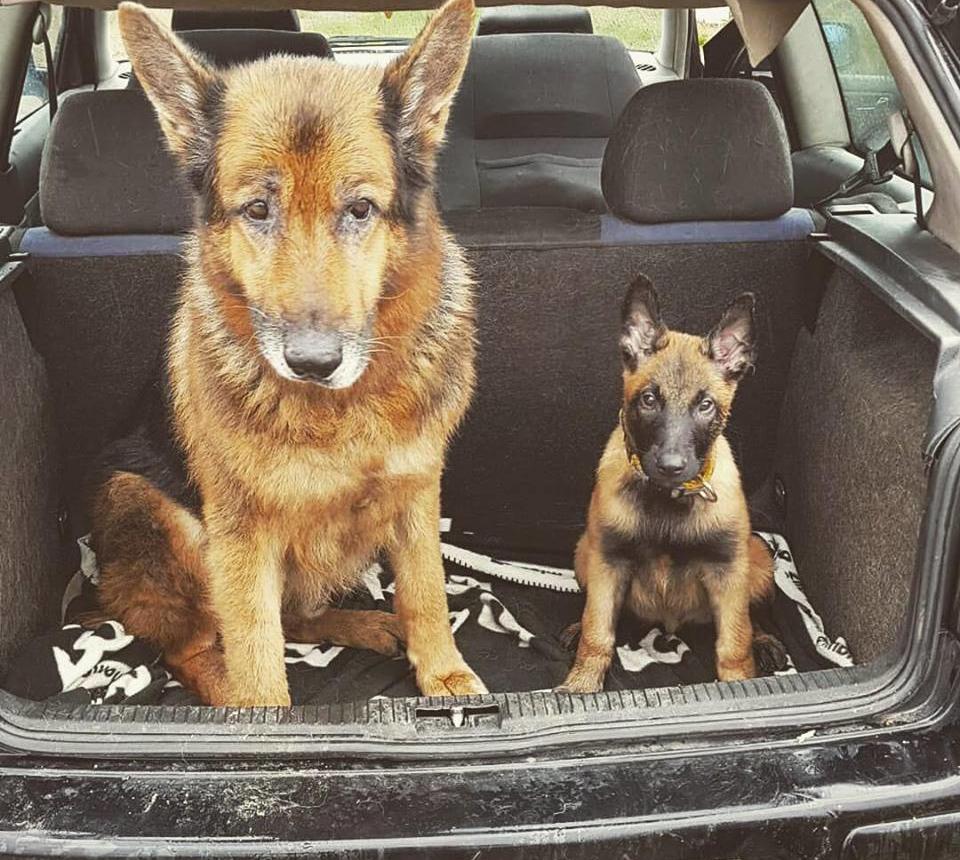 perros juntos felices