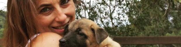 4 tipos de residencias caninas, ¿cuál es mejor para tu perro?
