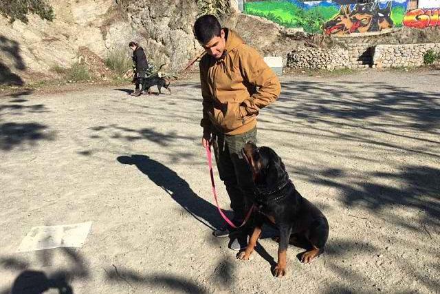 ejercicio canino sentado