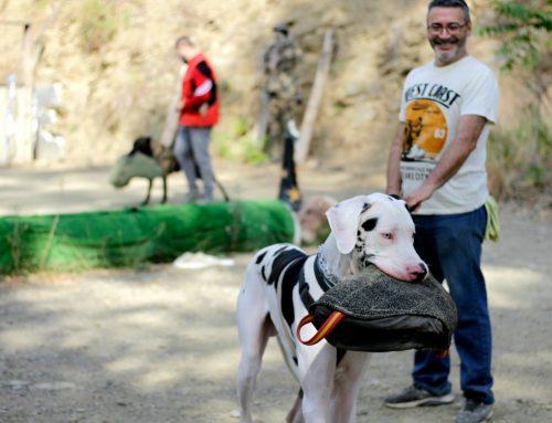 ¿Arnés o collar para perro? Cuál es mejor para pasear a tu perro