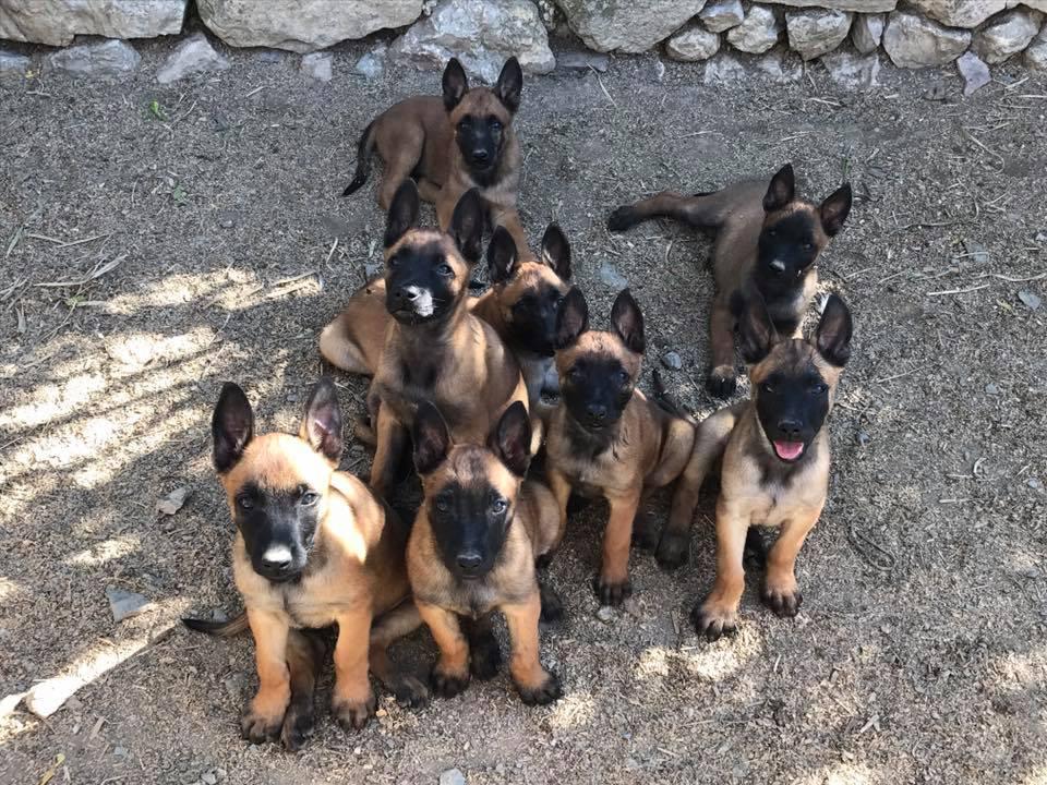 socializacion de cachorros